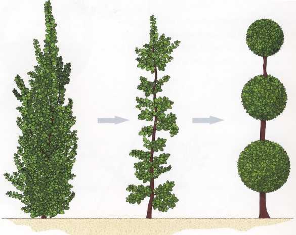 buchsbaum formen buchsbaum formen einige tipps und. Black Bedroom Furniture Sets. Home Design Ideas