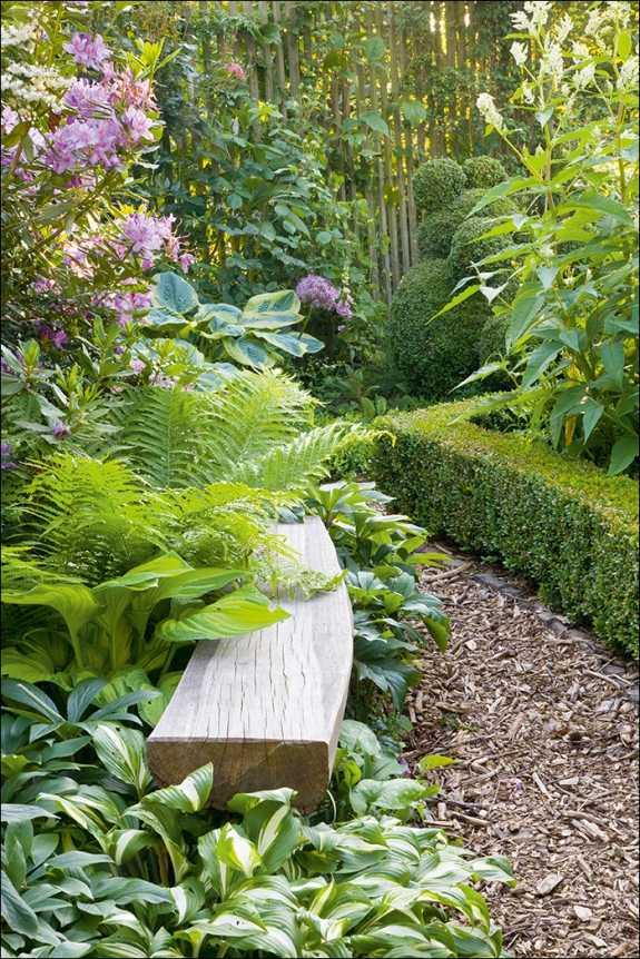 Immergrüne Pflanzen Für Schattige Plätze immergrüne pflanzen für schattige plätze pflanzen f r schattige pl