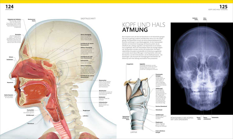 Prof. Dr. Alice Roberts: Anatomie und Physiologie | medienservice ...